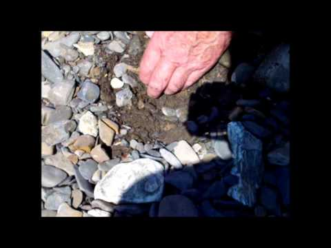 Gold prospecting with the Fisher F2 metal detector and with the Garrett Gold Pan
