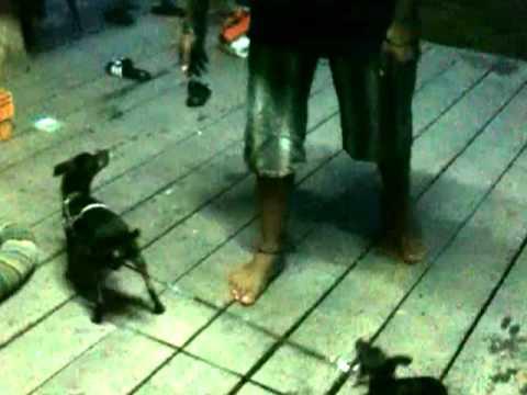 Amazing LOL Crazy funny dog wow   Interesting Dog
