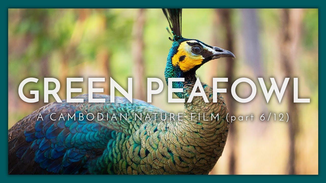 A Cambodian Nature Film - (Part 6 / 12)