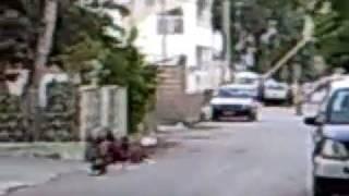 Sindhi Murgha n Aseel Murgha fight (Gulshan e iqbal, Karachi)