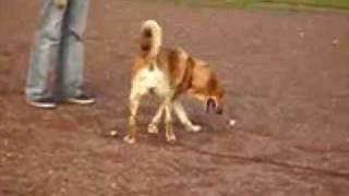 pozytywne szkolenie  psów - tropienie