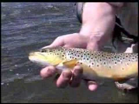 Grand County Colorado Fishing