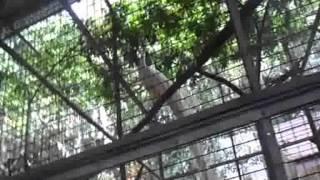 Ori Junilaksono 4915127066 Persebaran Fauna Indonesia PIPS B 2012 Dosen: Andri Rivelino. SE., M.Pd