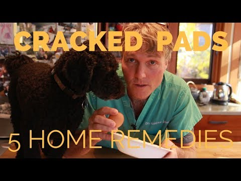 Pad Cracks And Paw Problems: 5 Home Remedies