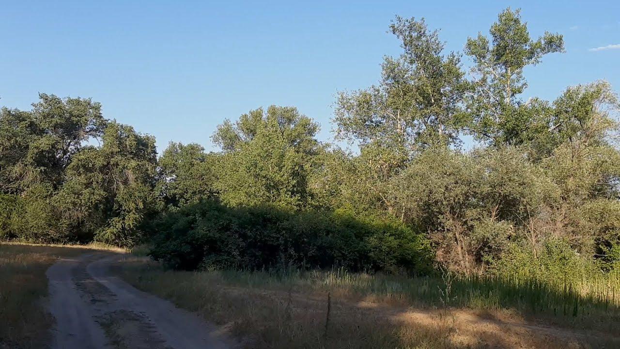 Пойменный дубовый лес под Волгоградом могут закатать в асфальт