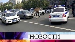 Наюго востоке Москвы спасатели иполицейские пытаются вытащить изпруда лося