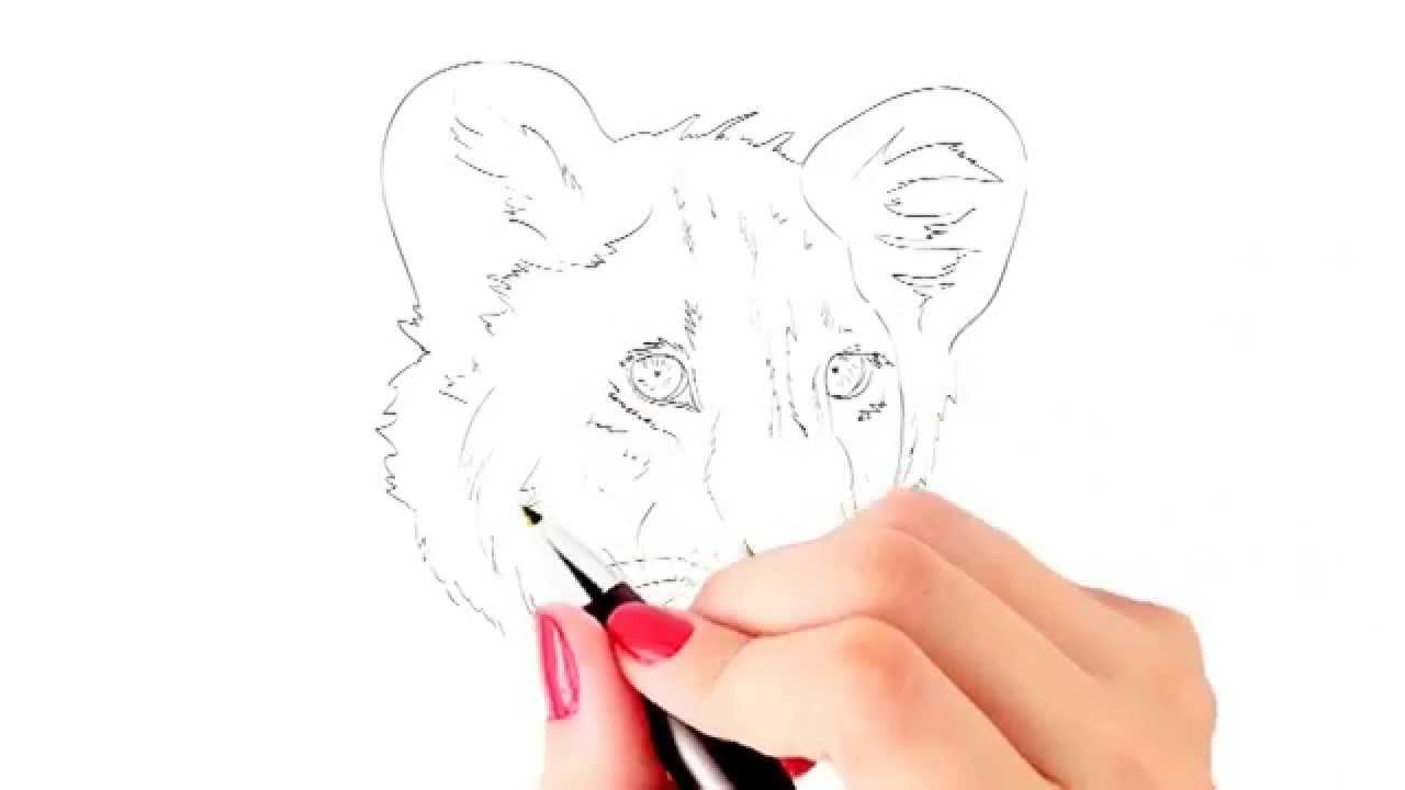 How To Draw A Baby Lion Or Lion Cub Face
