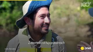 Hipopotamy Escobara grasują w Kolumbii   Onet100