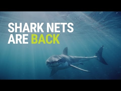 Shark Nets expanded in NSW