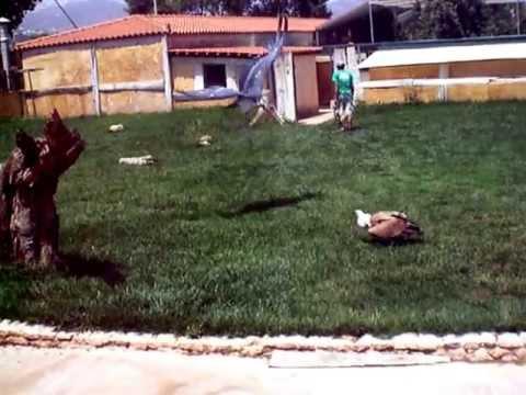 Αττικό Ζωολογικό Πάρκο (atticapark) Αρπακτικά πτηνά 1