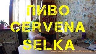 Пиво Cervena Selka [FixPrice]