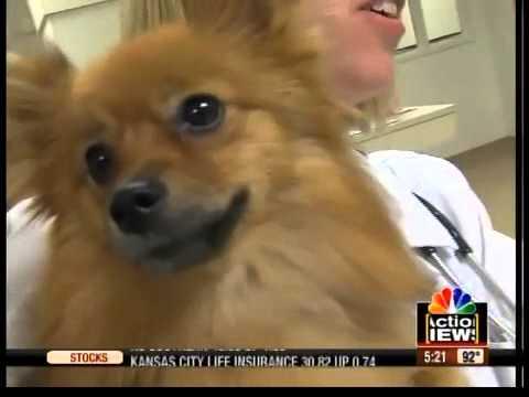 Local org. creating pet disaster plan