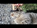 【地域猫】超ラブリーなイラストと一緒に団子ケア用のプレゼントが届く。【魚くれくれ野良猫製作委員会】
