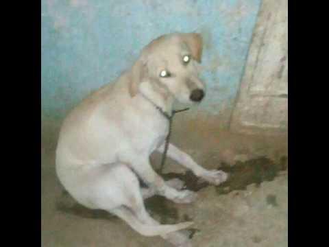 naveen puppy