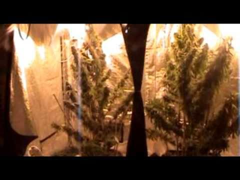 DAMPKRING An Amsterdam Grow Shop