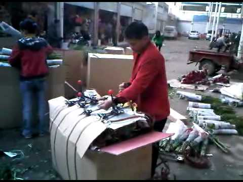 Funny movie on packing technique for cutflowers in China
