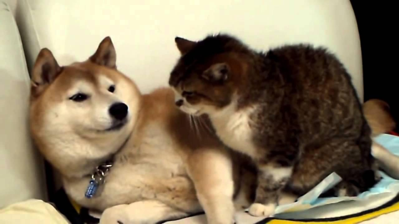 Кошка и собака балдеют от просмотра телевизора - YouTube