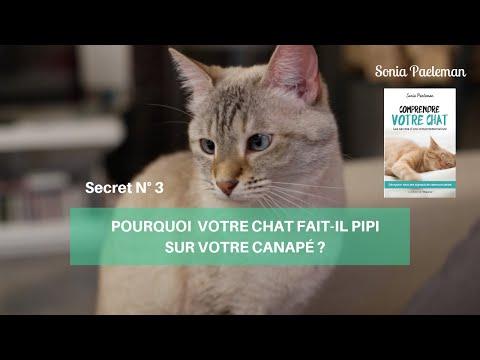 Pourquoi Votre Chat Fait-il Pipi Sur Votre Canapé?