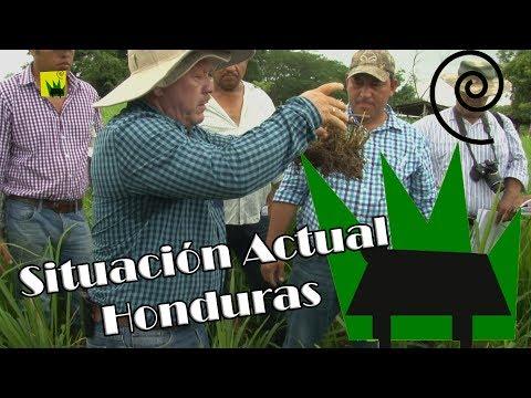 Diagnóstico Honduras Tierra Pastos y Ganado