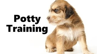 How To Potty Train An Otterhound Puppy - Otterhound House Training Tips - Otterhound Puppies