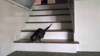 Lil BUB Climbs Down