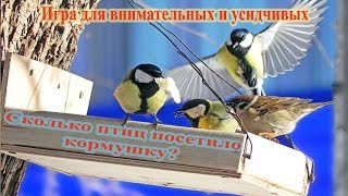 Сколько птиц посетило кормушку? Игра.