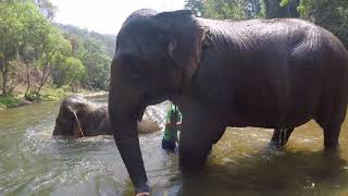 River bathing with elephants with Sophie & Lucky