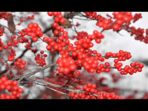 winterberry-hollies-at-hh-farm