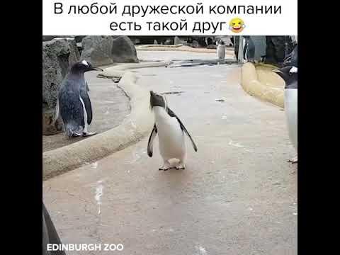 позитивный пингвин