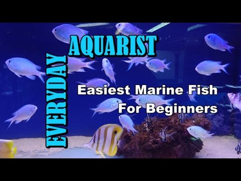 Top 5 Easiest Marine Fish For Beginners