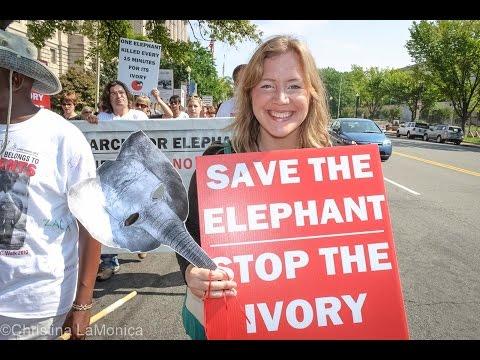 NJ Gov Chris Christie Bans The Sale Of Ivory