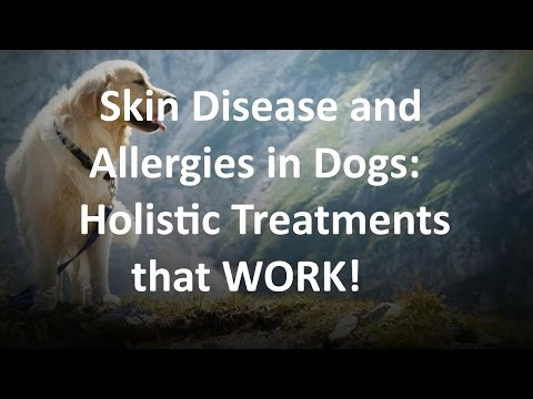 Holistic Treatment for Allergies and Skin Disease in Dogs Denver — Dr. Judy Jasek  720-515-2421