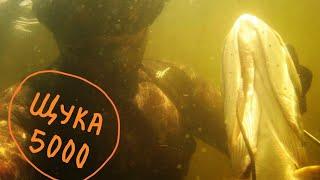 ЛУКА озеро Лосвидо 30 06 2020 Витебская область