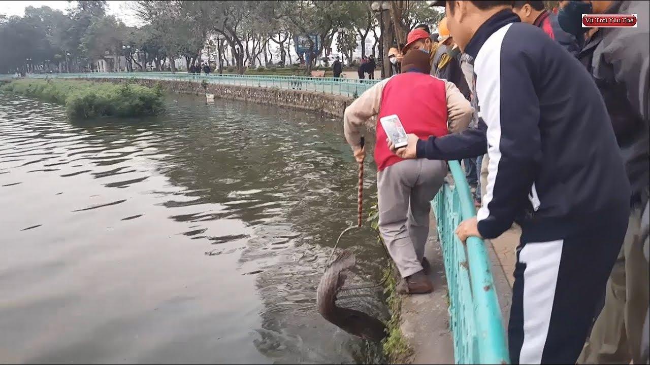 Thủy quái hồ tây | Câu được cá trê khủng bằng ba tiêu