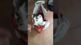 CAT IN THE BAG Funny funny funny