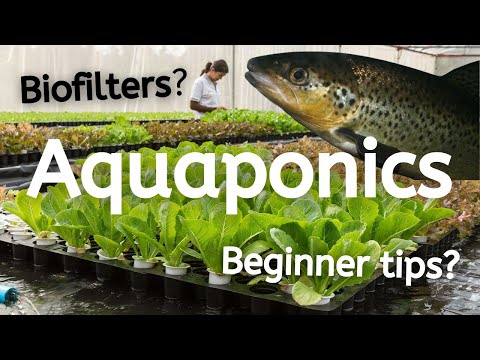 What is Aquaponics and How Does it Work?