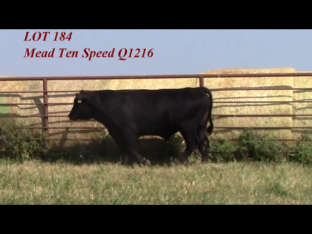 Mead Angus Lot 184