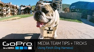 Gopro Media Team Tips And Tricks: Fetch (dog Harness) (ep 24)