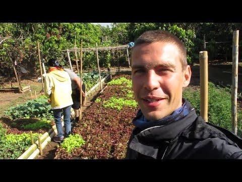 Organic Garden (Northern Thailand)