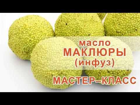Адамово яблоко или маклюра для суставов: лечебные свойства