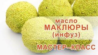 Маклюра инфуз рецепт