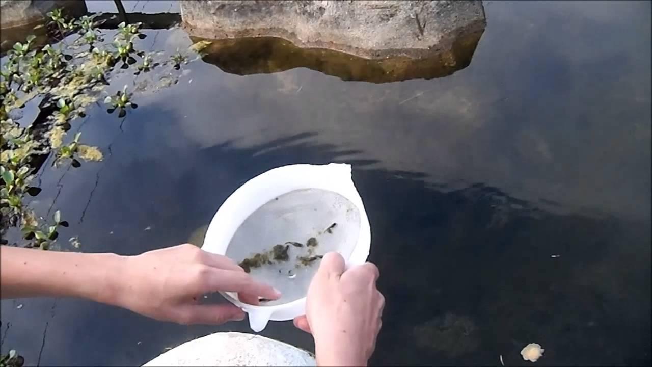 O laguinho e seus mistérios ! prt-2 (Aquarismo)