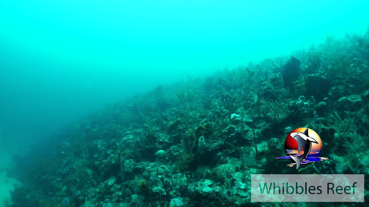 Whibbles Reef, Grenada