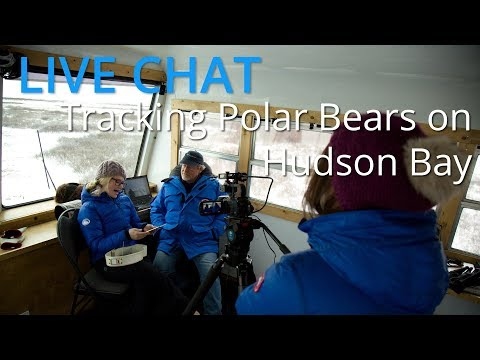 LIVE CHAT Nov 11, 2014: Tracking Polar Bears on the Hudson Bay