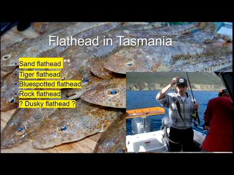 Flathead In Tasmania, Hobart Fisheries Forum Presentation 1