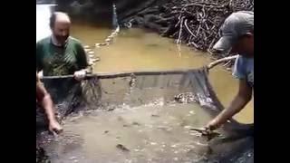 Хеико Блэер ловит Дискусы  , Альтумы   качество воды