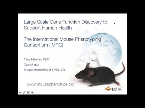 Large Scale Gene Function Discovery to Support Human Health: IMPC