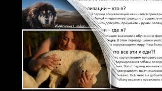Презентация Тамары Джапаридзе по аборигенным собакам 18 12 2018