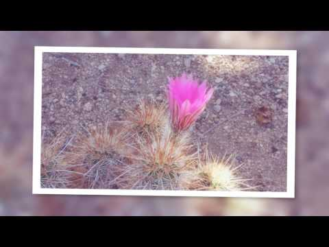 Desert in bloom -at Jessicas place