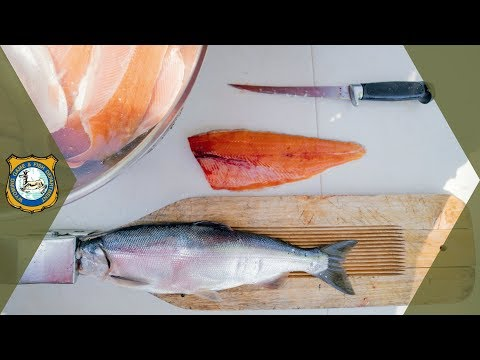 How To Fillet A Fish - Easy Instructions